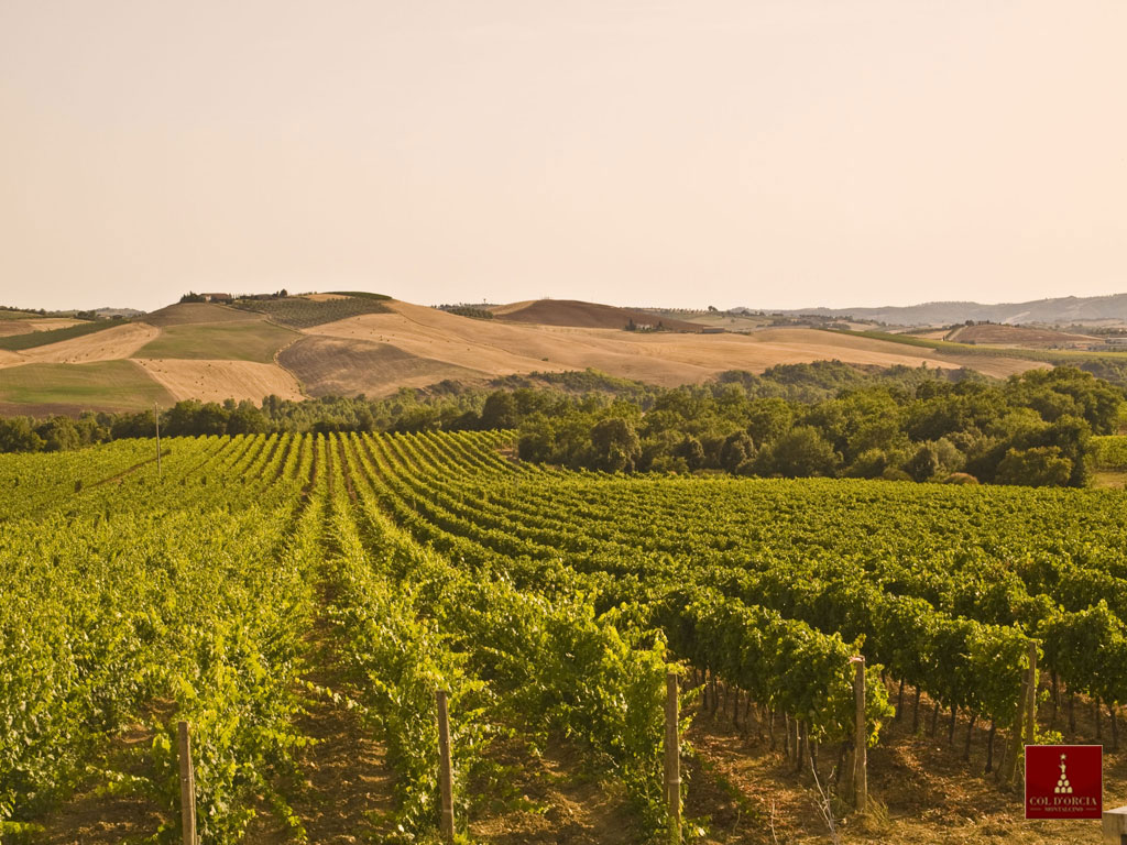 Montalcino Col d'Orcia vineyards